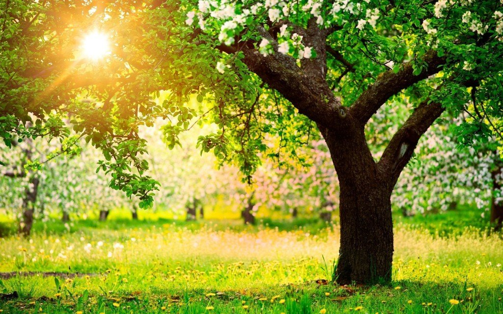 Ce arbore esti in zodiacul celtic